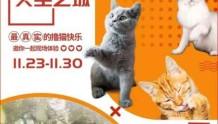 今年最后一次撸猫!还有超爽VR体验!就在西安城北