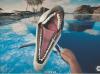 以保护动物为主题,Forestlight发布海豚训练师VR模拟游戏